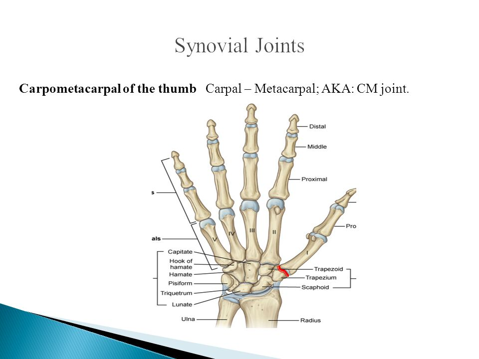 Synovial Joints Carpometacarpal of the thumb Carpal – Metacarpal; AKA: CM joint.