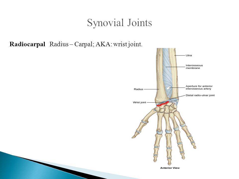 Synovial Joints Radiocarpal Radius – Carpal; AKA: wrist joint.