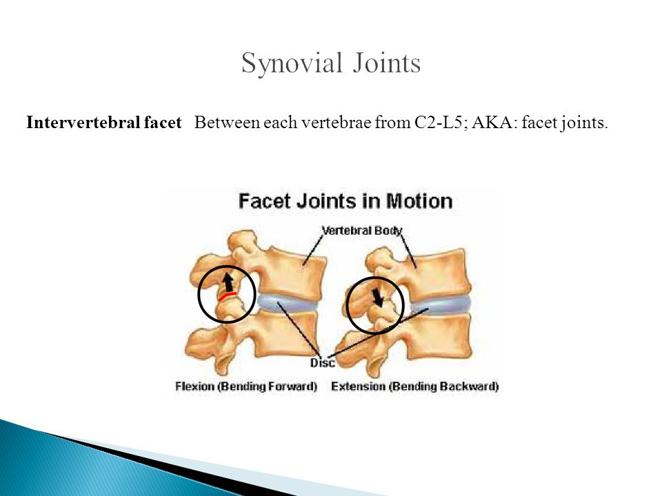 Synovial Joints Intervertebral facet Between each vertebrae from C2-L5; AKA: facet joints.