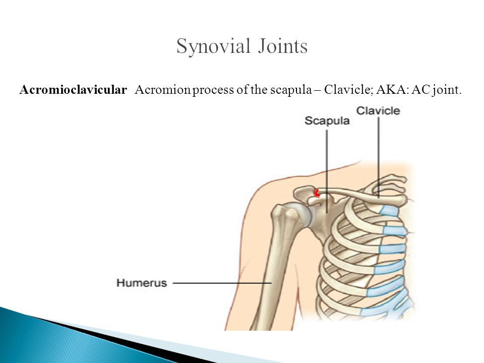 Synovial Joints Acromioclavicular Acromion process of the scapula – Clavicle; AKA: AC joint.
