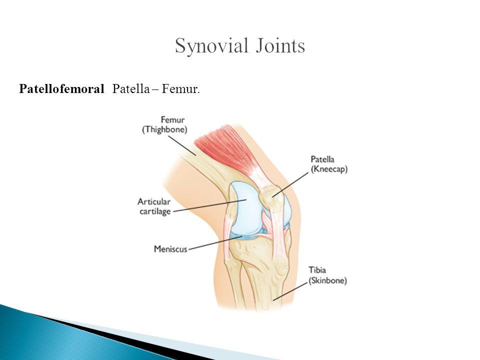 Synovial Joints Patellofemoral Patella – Femur.