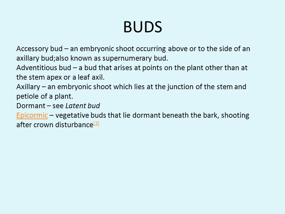 BUDS Accessory bud – an embryonic shoot occurring above or to the side of an axillary bud;also known as supernumerary bud.
