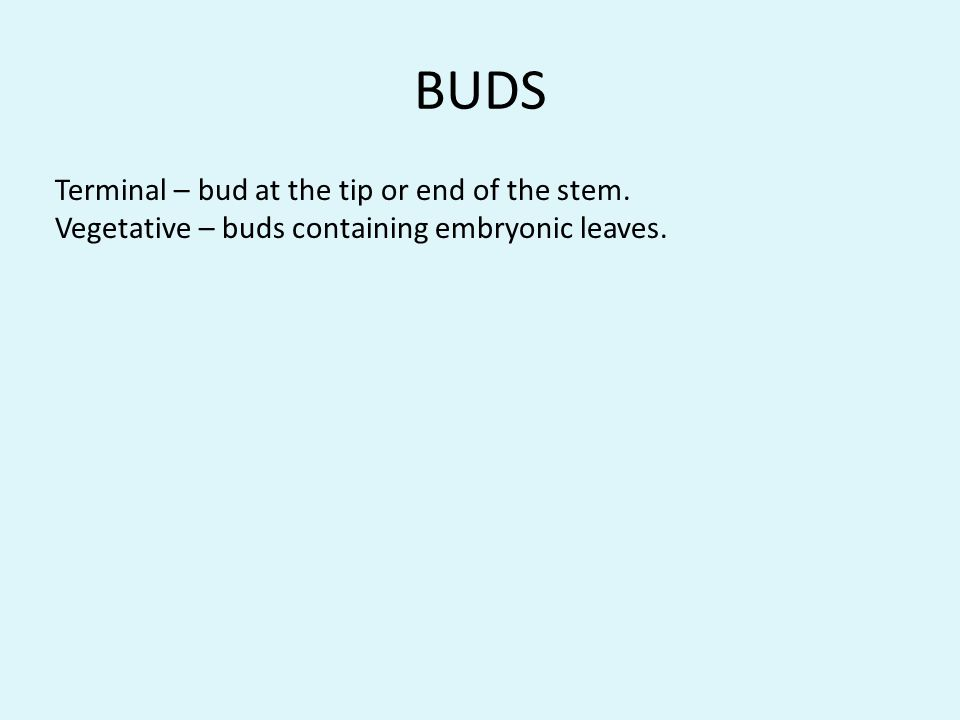 BUDS Terminal – bud at the tip or end of the stem.