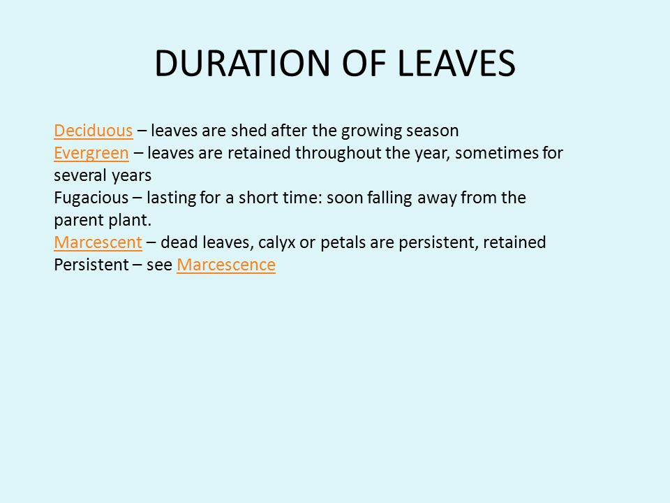 DURATION OF LEAVES Deciduous – leaves are shed after the growing season.