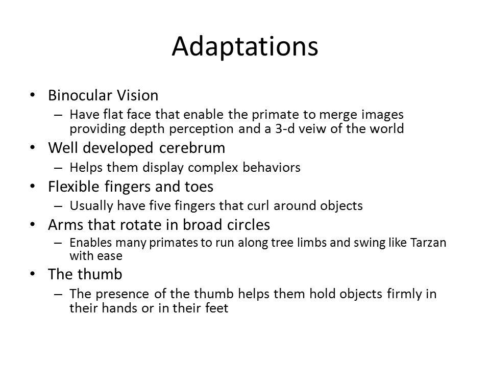 Adaptations Binocular Vision Well developed cerebrum