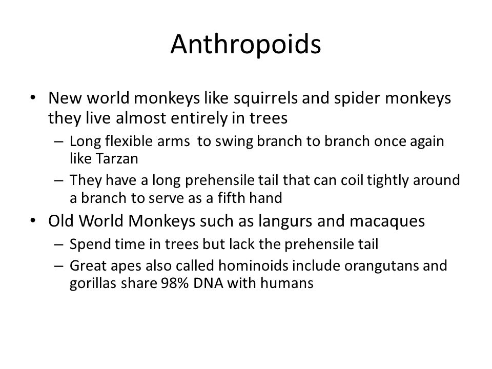 Anthropoids New world monkeys like squirrels and spider monkeys they live almost entirely in trees.
