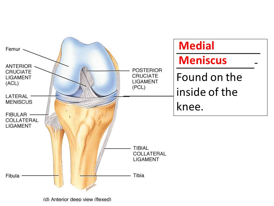 Medial Meniscus ___________________________- Found on the inside of the knee.