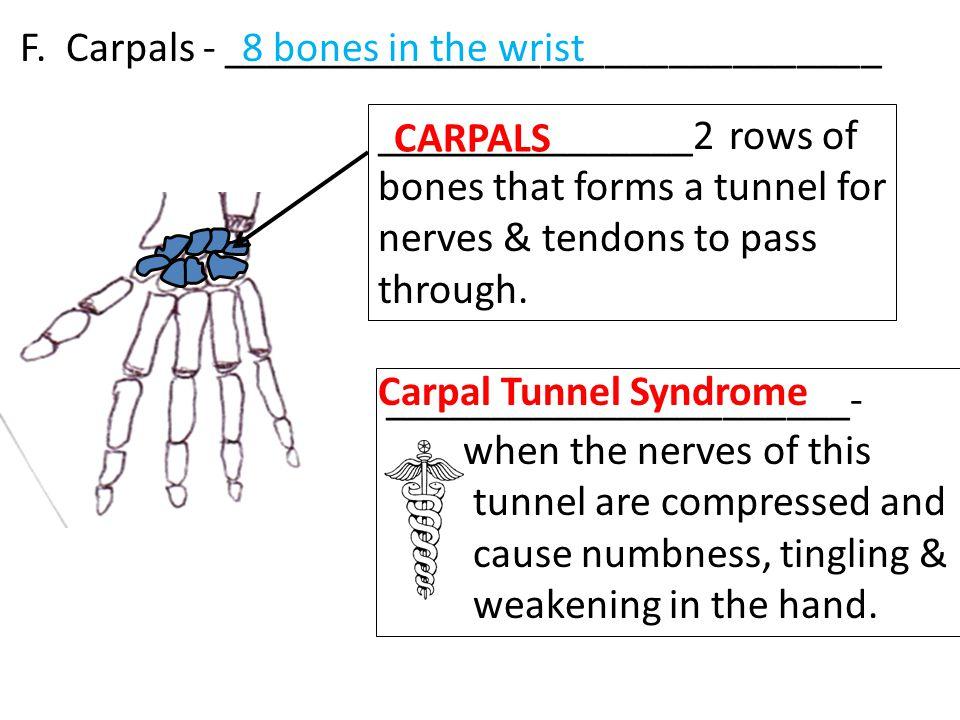 F. Carpals - _______________________________