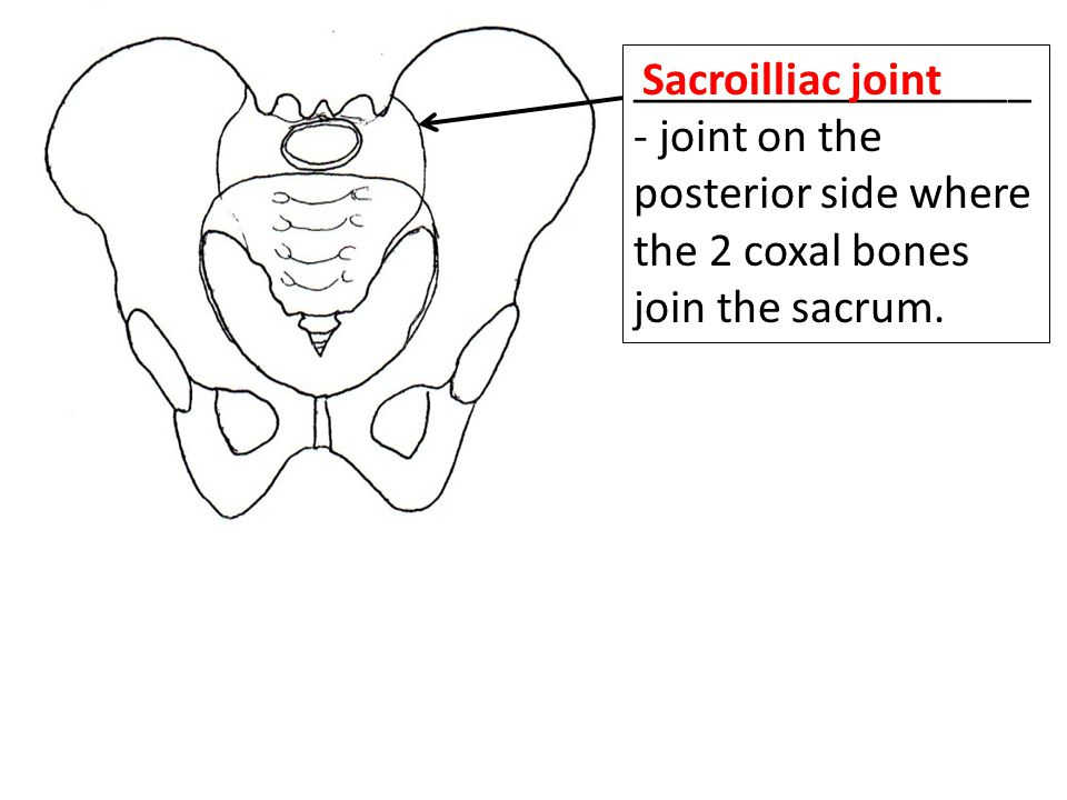 _________________- joint on the posterior side where the 2 coxal bones join the sacrum.