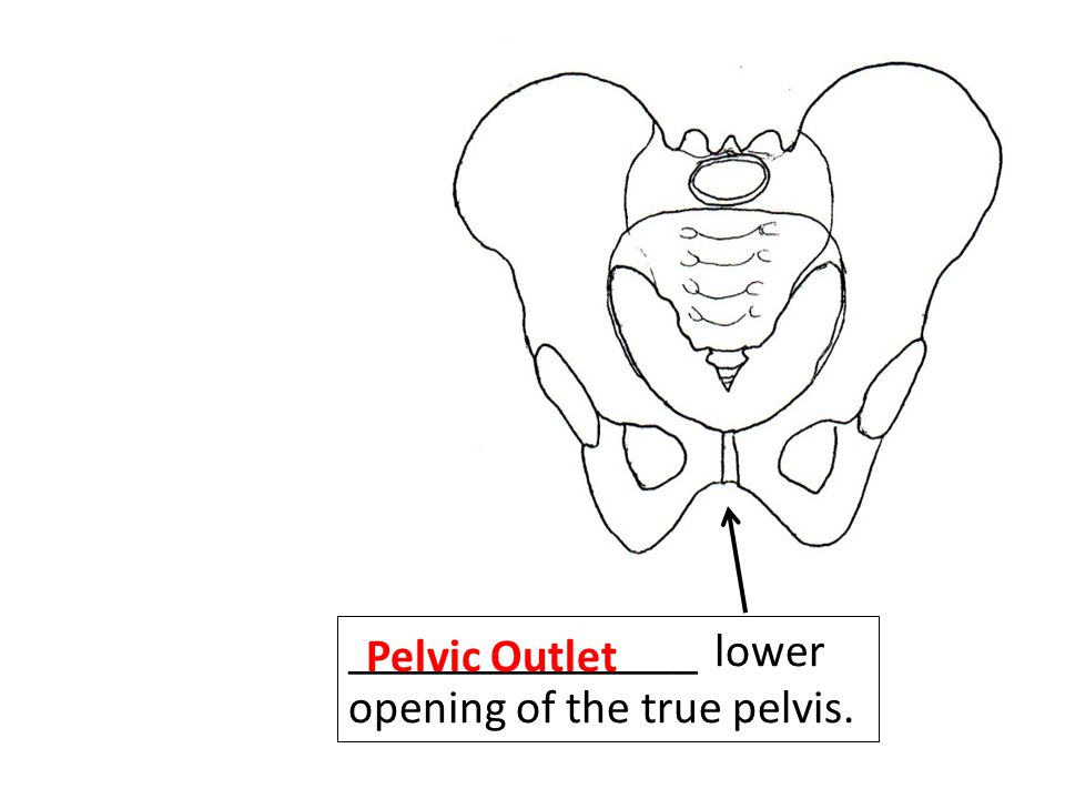 _______________ lower opening of the true pelvis.