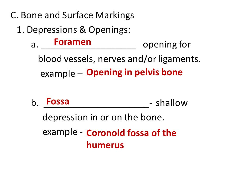 C. Bone and Surface Markings 1. Depressions & Openings: a