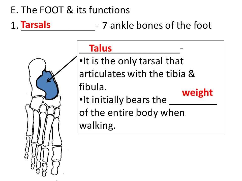 E. The FOOT & its functions 1