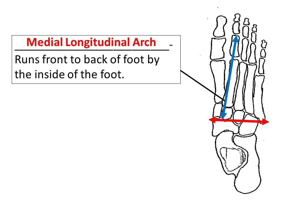 Medial Longitudinal Arch
