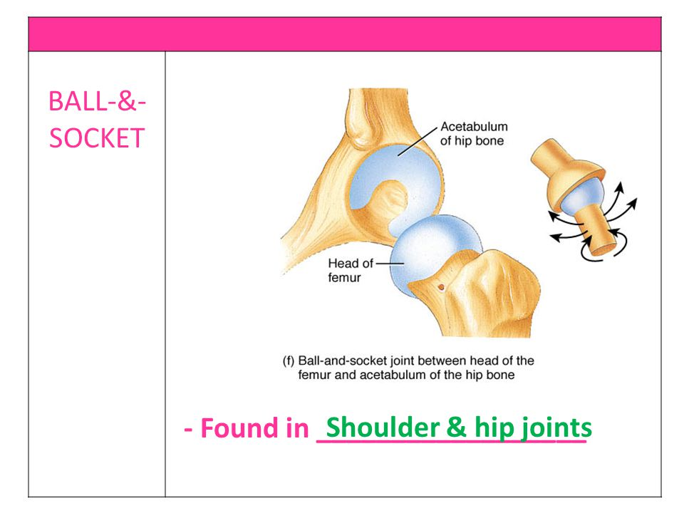 BALL-&-SOCKET - Found in __________________ Shoulder & hip joints