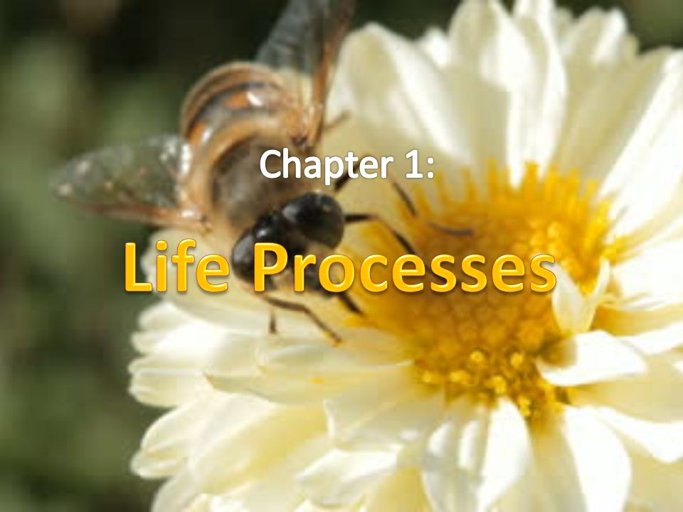 Chapter 1: Life Processes