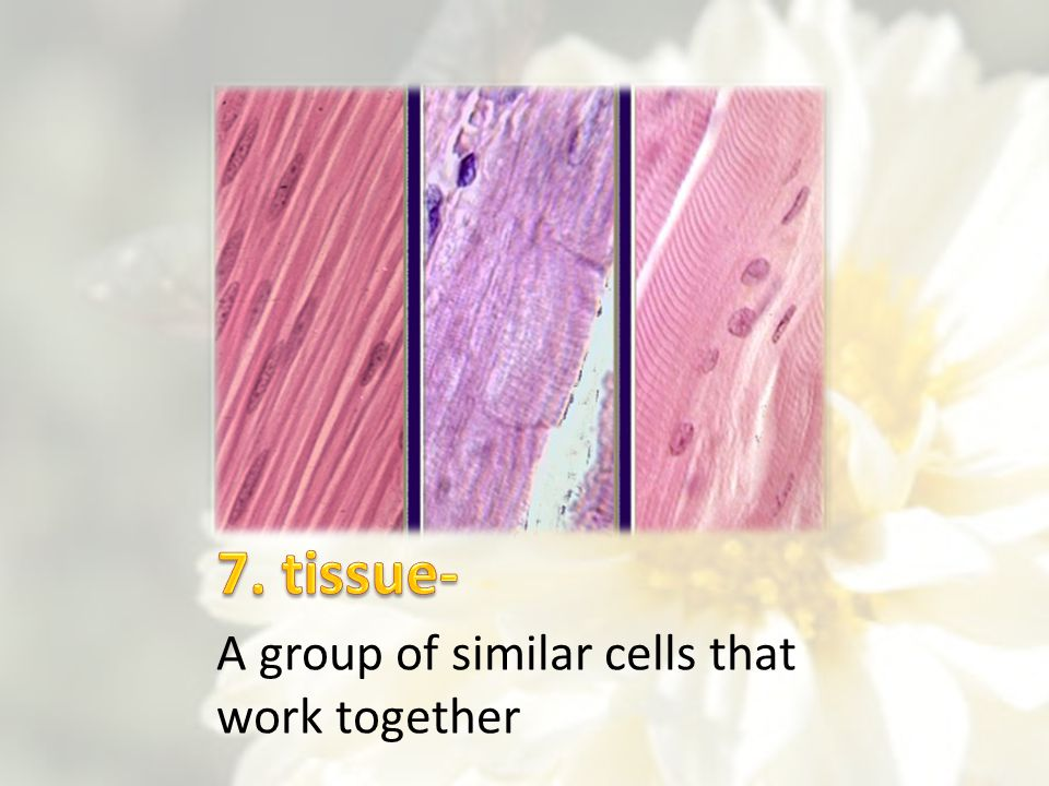 7. tissue- A group of similar cells that work together