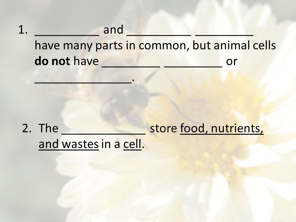 __________ and __________ _________ have many parts in common, but animal cells do not have _________ _________ or _______________.