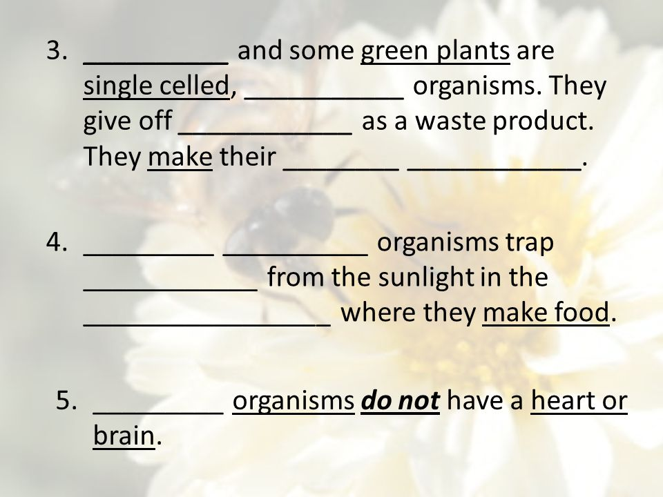 __________ and some green plants are single celled, ___________ organisms. They give off ____________ as a waste product. They make their ________ ____________.
