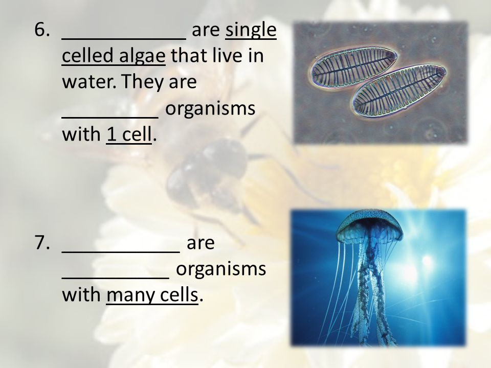 ___________ are __________ organisms with many cells.