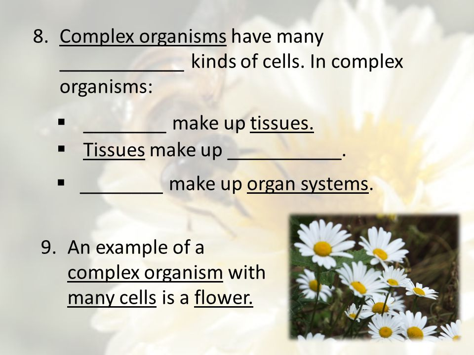 Complex organisms have many ____________ kinds of cells