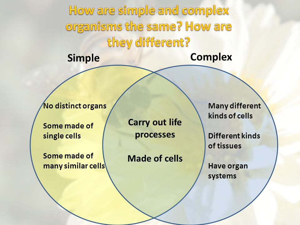How are simple and complex organisms the same How are they different