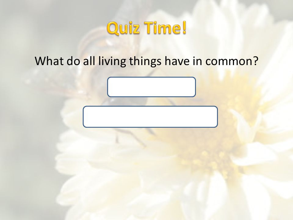 Quiz Time! What do all living things have in common Made of cells