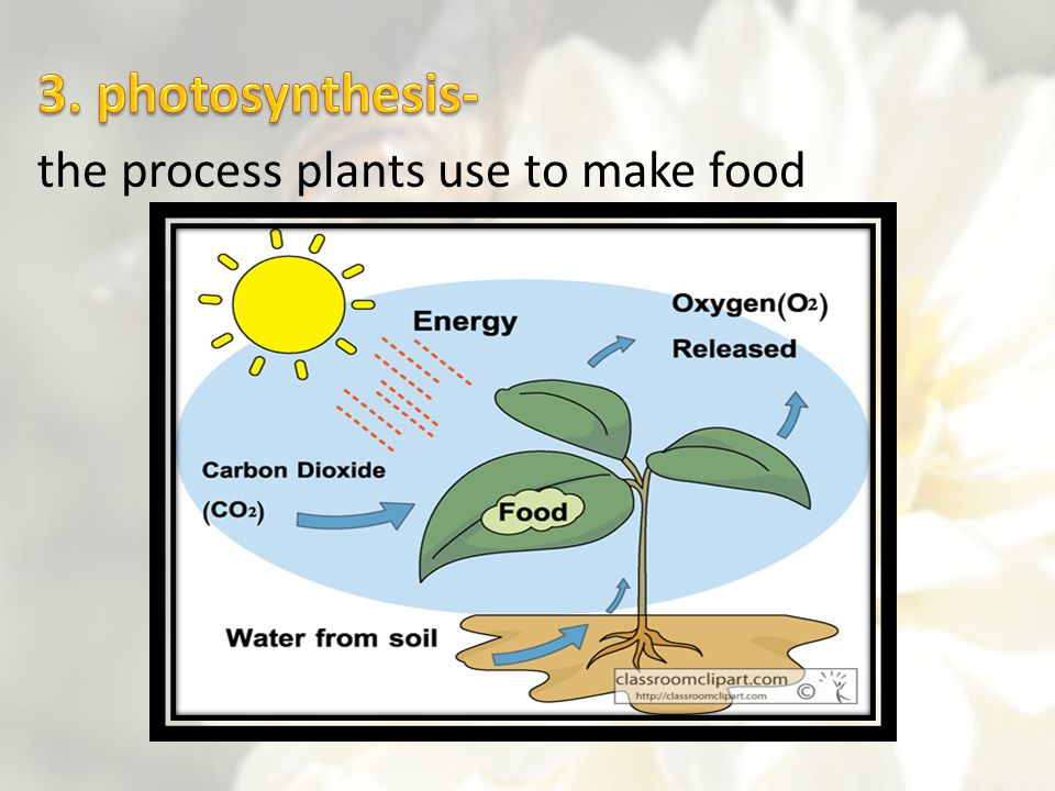 3. photosynthesis- the process plants use to make food