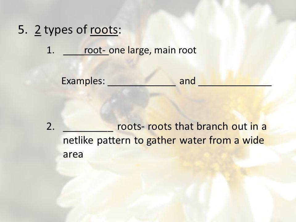 2 types of roots: ____root- one large, main root. Examples: _____________ and ______________.
