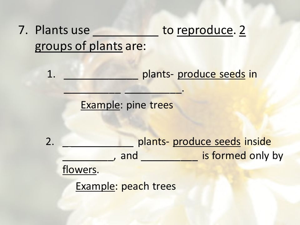 Plants use __________ to reproduce. 2 groups of plants are: