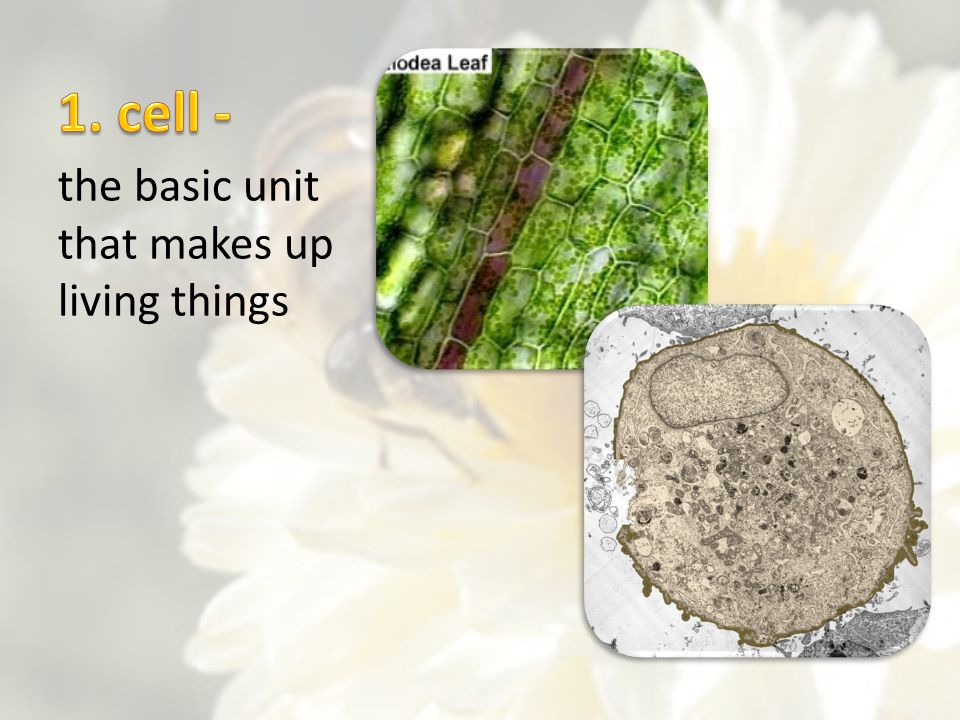 1. cell - the basic unit that makes up living things