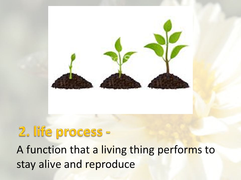 2. life process - A function that a living thing performs to stay alive and reproduce