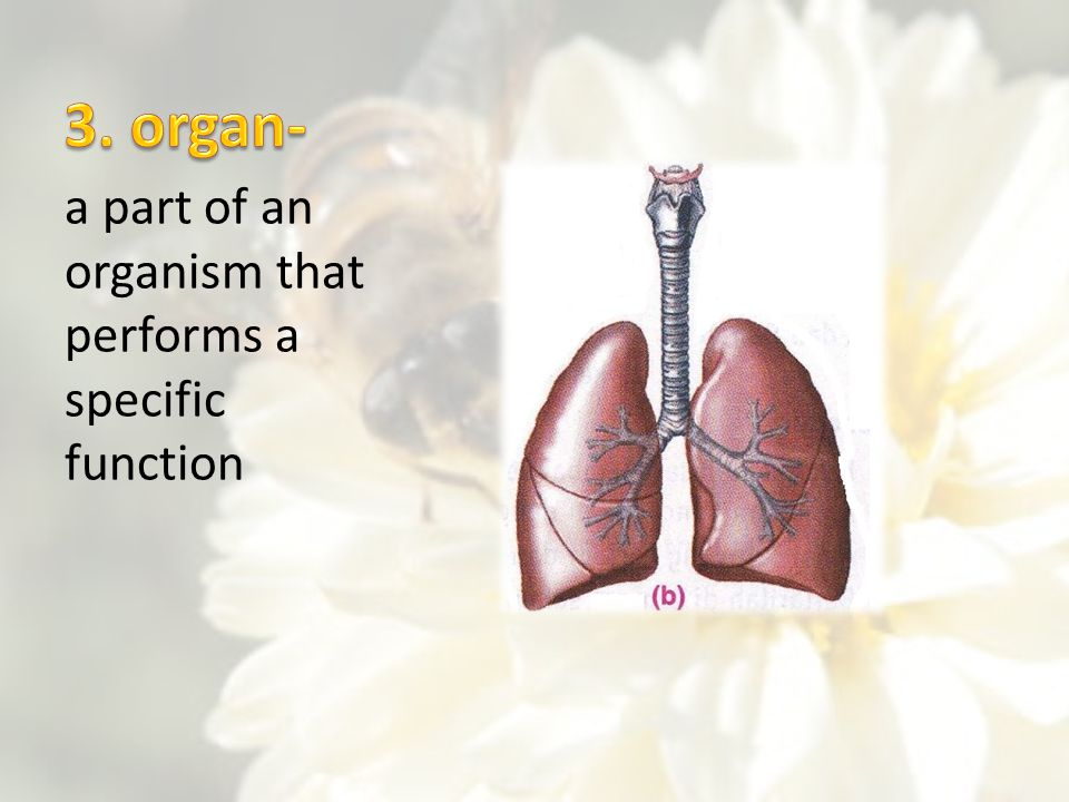 3. organ- a part of an organism that performs a specific function
