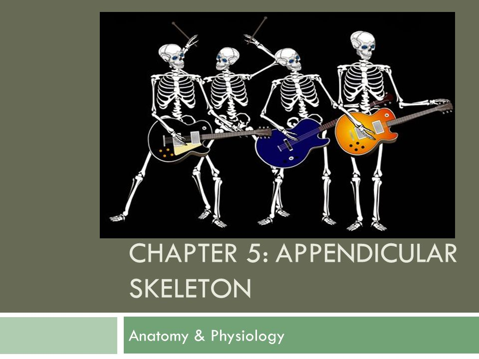 Chapter 5: appendicular skeleton