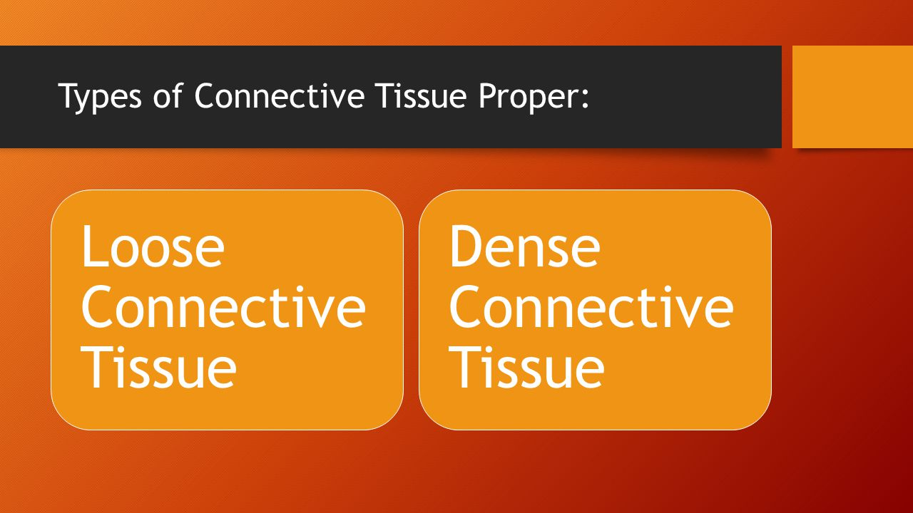 Types of Connective Tissue Proper: