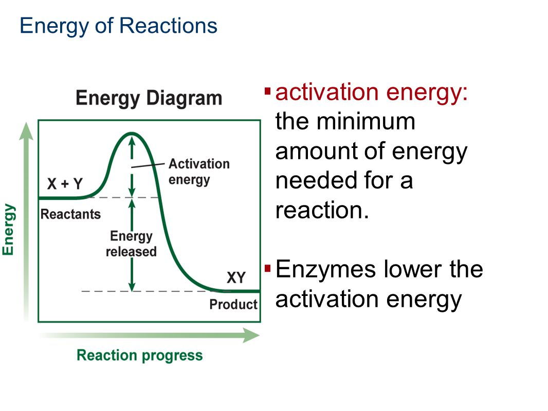 activation energy: the minimum amount of energy needed for a reaction.