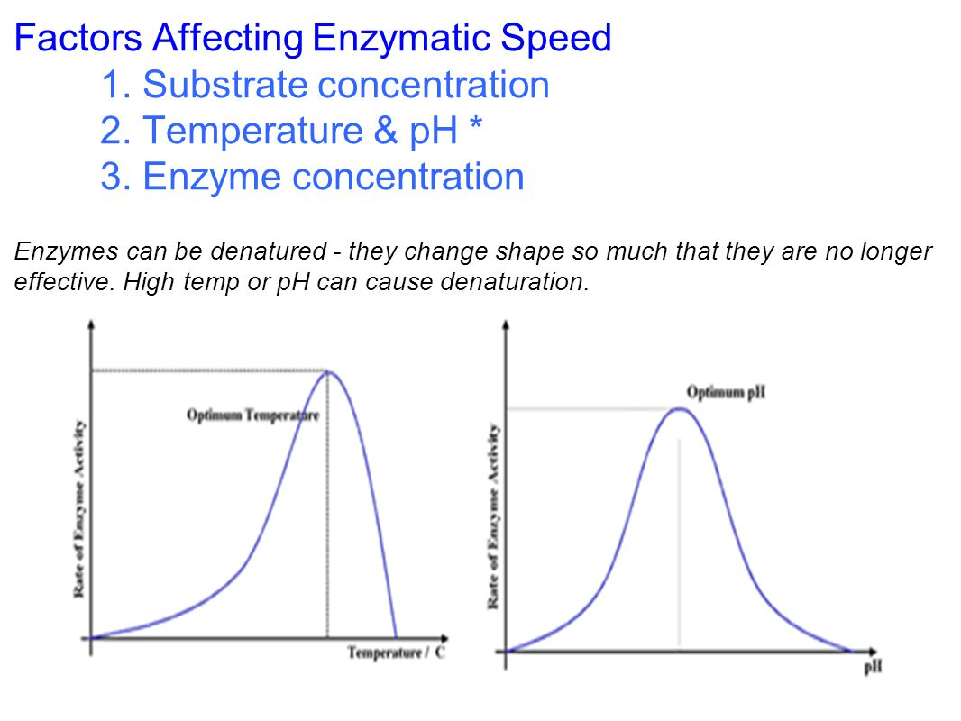 Factors Affecting Enzymatic Speed
