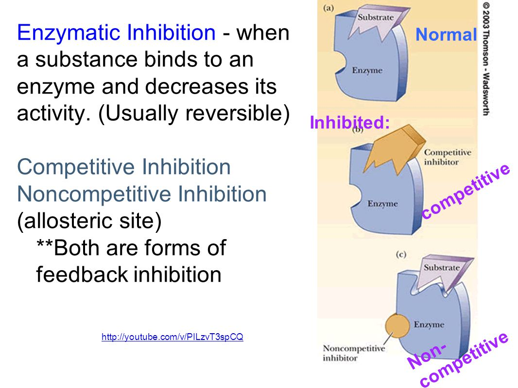 Competitive Inhibition Noncompetitive Inhibition (allosteric site)