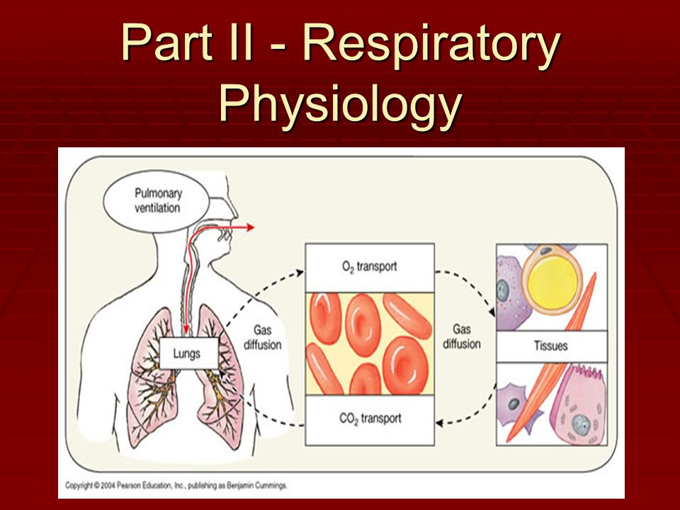Part II - Respiratory Physiology