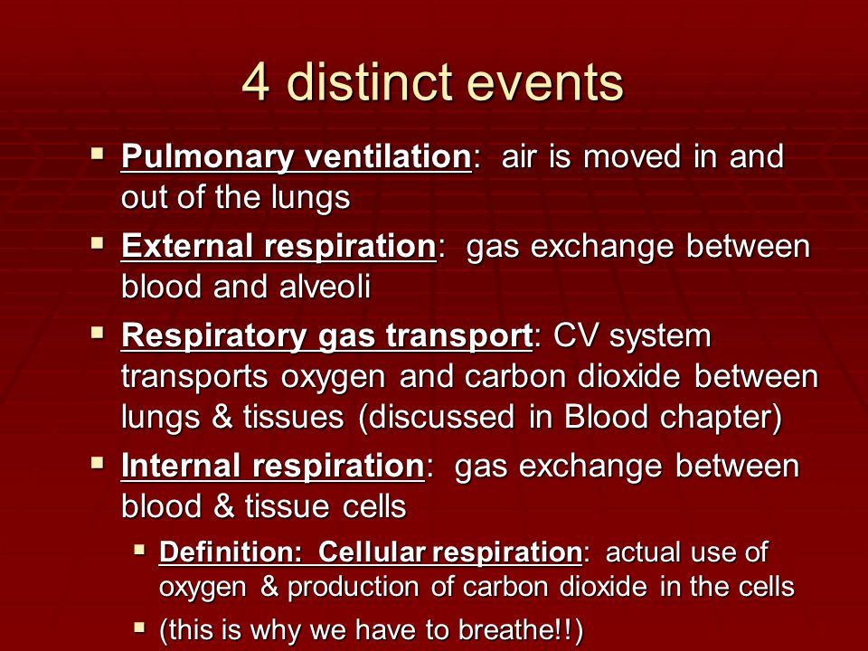 4 distinct events Pulmonary ventilation: air is moved in and out of the lungs. External respiration: gas exchange between blood and alveoli.