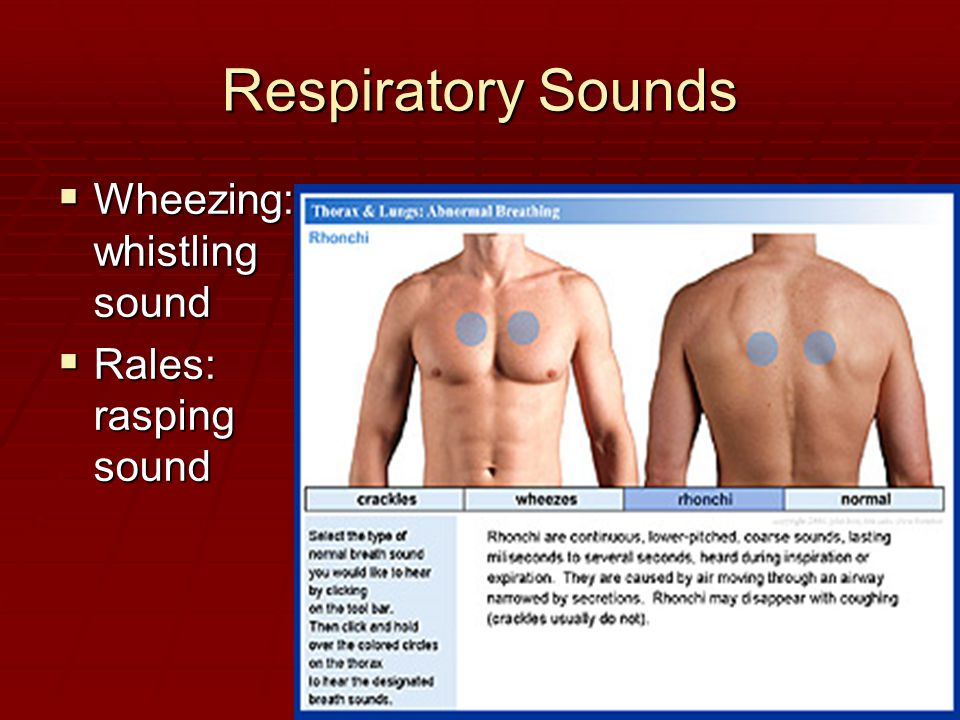 Respiratory Sounds Wheezing : whistling sound Rales: rasping sound