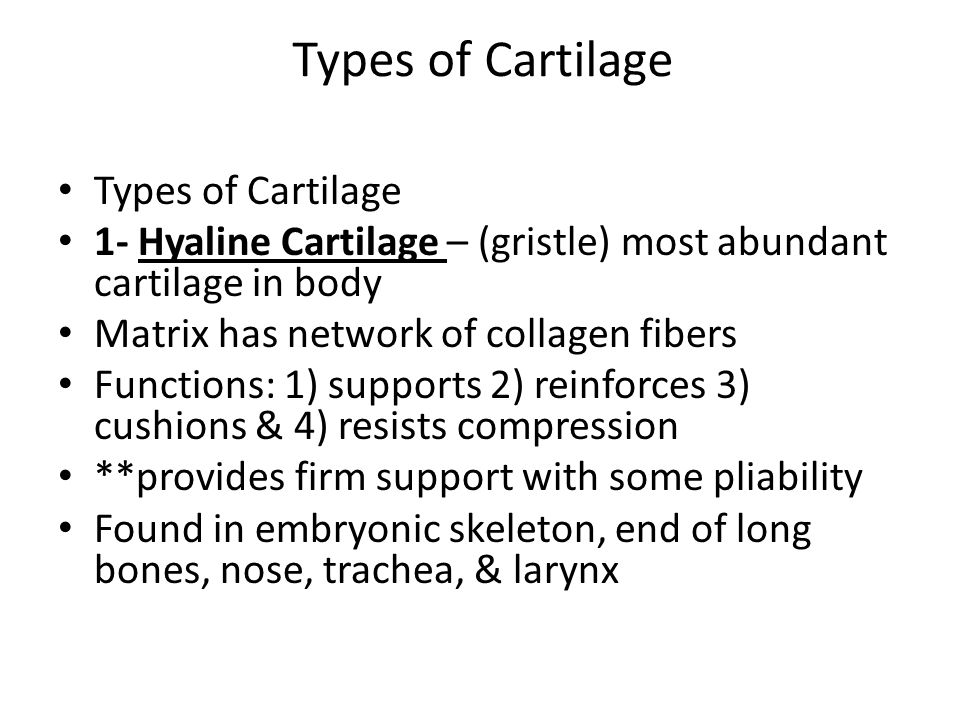 Types of Cartilage Types of Cartilage