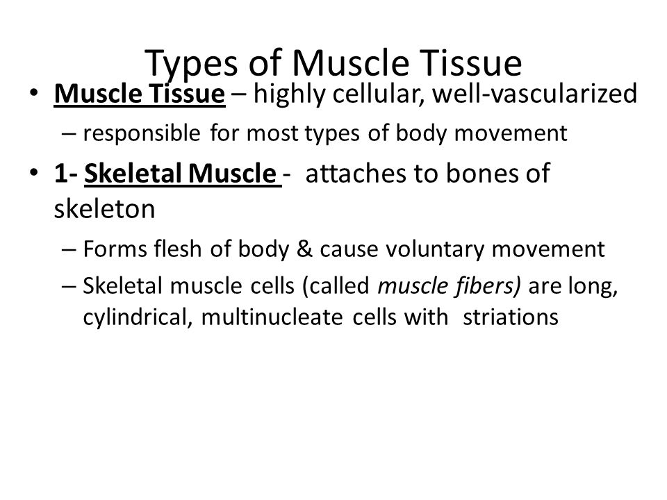 Types of Muscle Tissue Muscle Tissue – highly cellular, well-vascularized. responsible for most types of body movement.