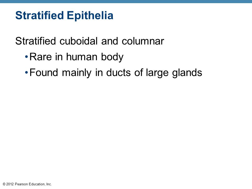 Stratified Epithelia Stratified cuboidal and columnar