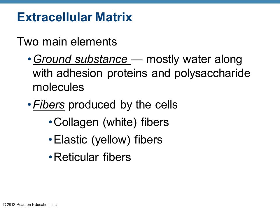 Extracellular Matrix Two main elements