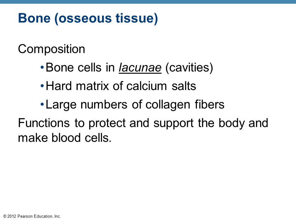 Bone (osseous tissue) Composition Bone cells in lacunae (cavities)