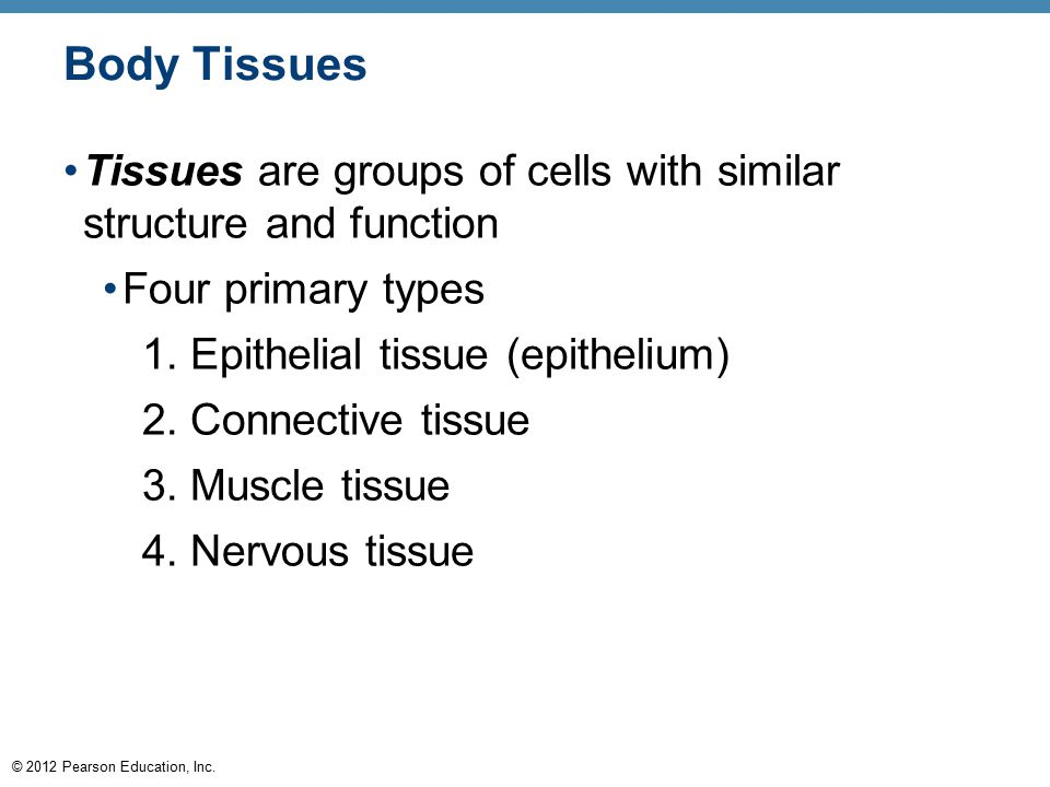 Body Tissues Tissues are groups of cells with similar structure and function. Four primary types. 1. Epithelial tissue (epithelium)