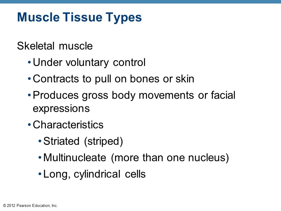 Muscle Tissue Types Skeletal muscle Under voluntary control