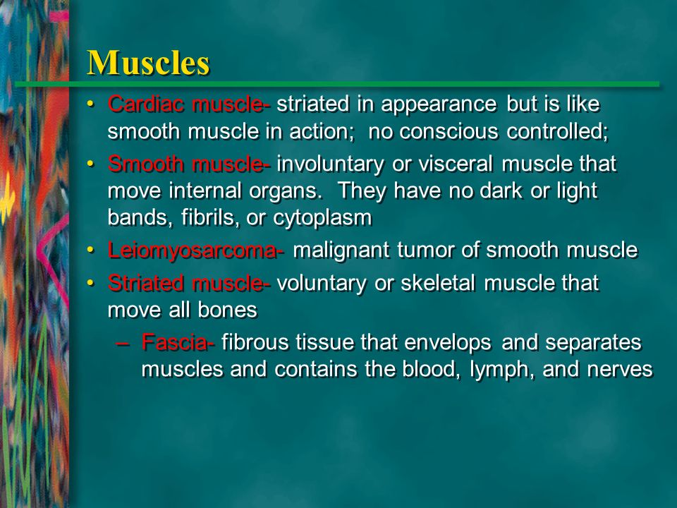Muscles Cardiac muscle- striated in appearance but is like smooth muscle in action; no conscious controlled;