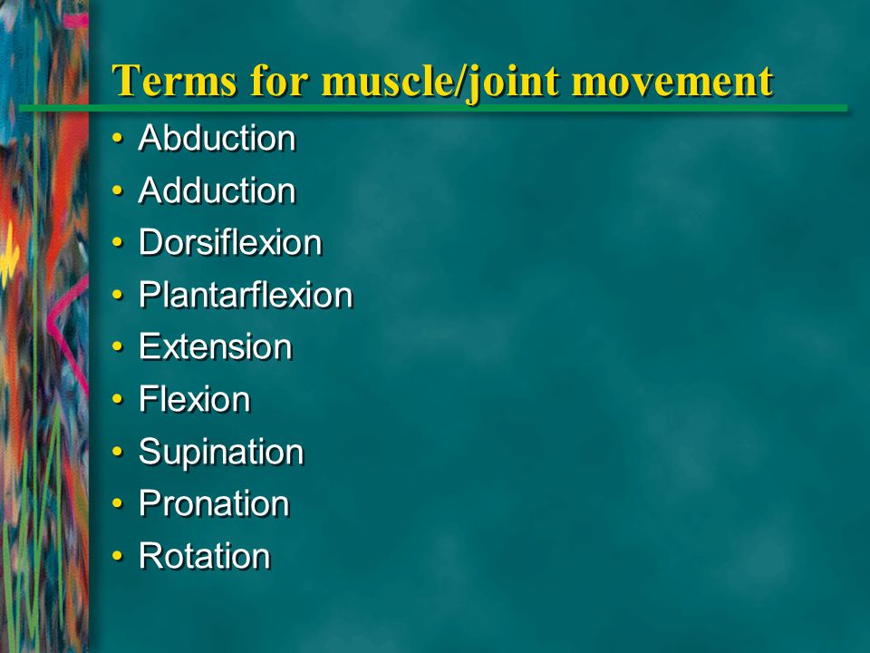 Terms for muscle/joint movement