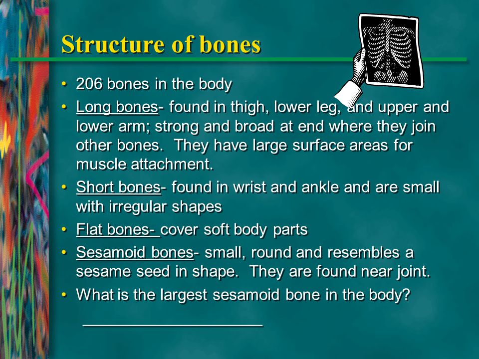 Structure of bones 206 bones in the body